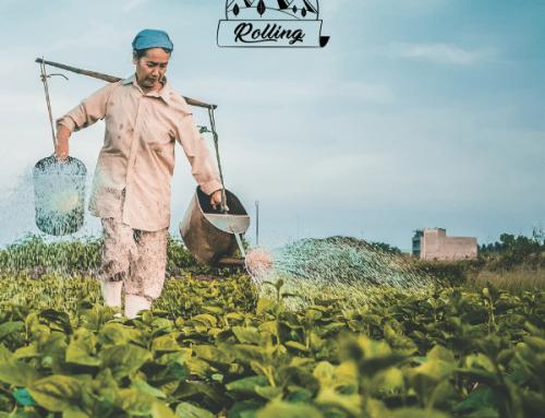 Tabacchi Organici: realtà o fantasia?